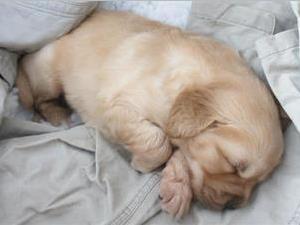 狗狗为什么老是想上床?