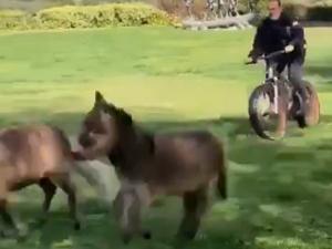 施瓦辛格骑车遛马和驴 豪宅曝光自家院子令