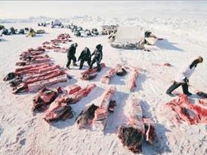 法罗群岛为什么要杀鲸鱼?