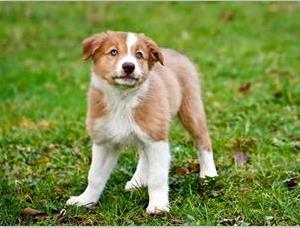狗为什么喜欢亲人嘴巴?