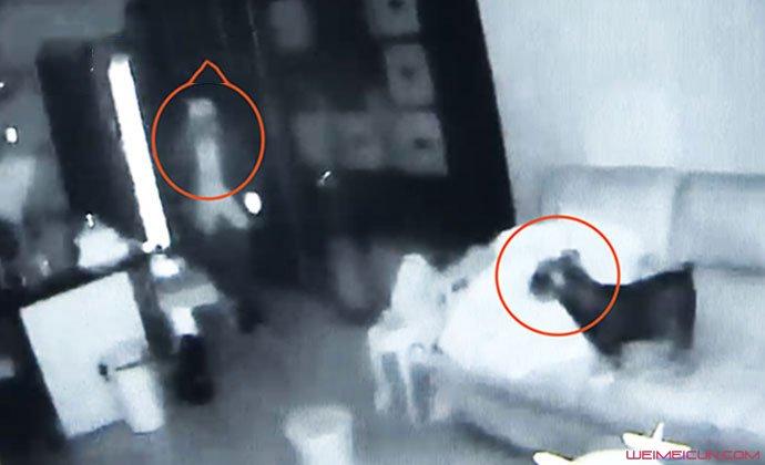入室盗窃宠物狗全程安静围观