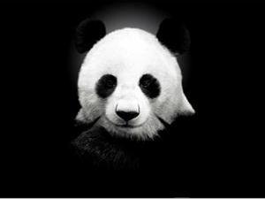日本人为什么对熊猫这么狂热?