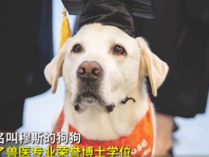 8岁治疗犬获博士学位 解读完它的故事就会觉得实至名归