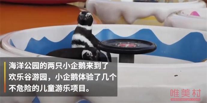 武汉欢喜谷有两只企鹅游客 一蹦一跳均有差别风范让人看呆(原创)