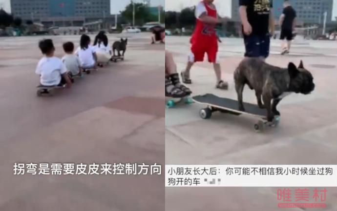 斗牛犬踩滑板带小朋友遛弯