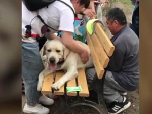 狗子太胖被公园长椅卡住 众人施救狗主人:丢尽狗脸