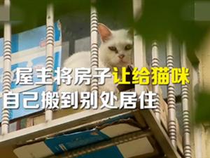 夫妻搬家把房让给66只猫 网友:不能让邻居