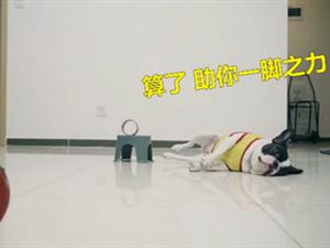 主人练习打乒乓球狗狗神助攻 主人智商被碾压狗腿子厉害了