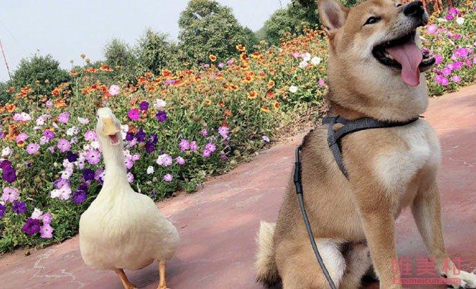瓢哥与好朋友吉吉