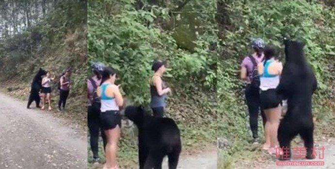 女子路遇野生黑熊被抱住淡定自拍