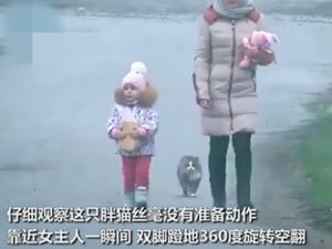 """胖猫走路突然起飞360度空翻 """"功夫胖喵""""惊呆众人了"""