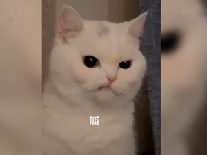 天生一副拽样的猫咪走红 背后的原因却很可