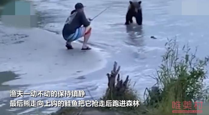 镇定渔夫遇熊一秒变雕塑