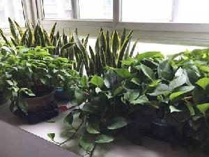 植物也会思考 植物也是有情绪的