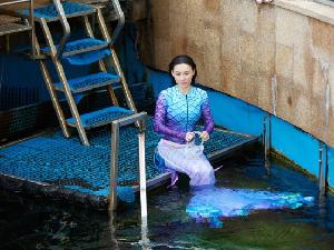张柏芝挑战美人鱼造型 水下潜游与鱼群为伴