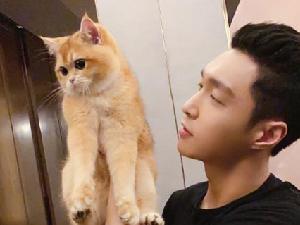 张艺兴有几只猫 张艺兴的猫都叫什么