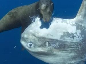 海洋中最智障的生物