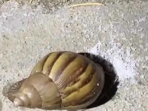香港男子因向蜗牛撒盐被逮捕 涉嫌虐杀动物